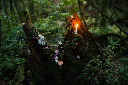 Herbs to heighten psychic abilities